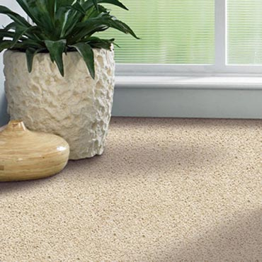 Shaw Carpet Bellera Collection | Beloit, WI